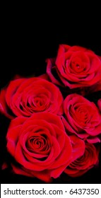 red roses isolated on black background