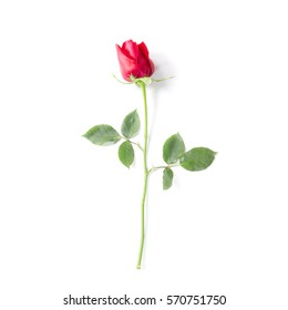 Red roses isolated on a white background