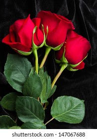 red roses on black satin
