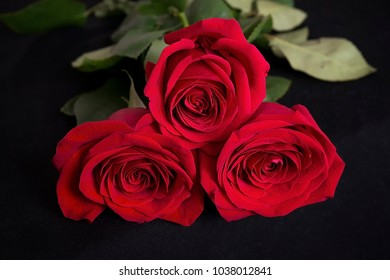 Red roses on black tissue background