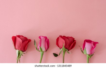 Red roses on pink background. Space to copy. Top view.