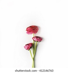 red roses or ranunculus isolated on white background. Flat lay, top view