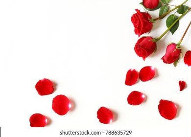 Red roses and rose petals isolated on white background
