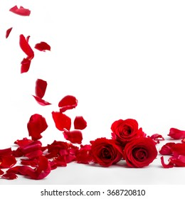 Red roses and rose petals on white background,Valentines day concept.