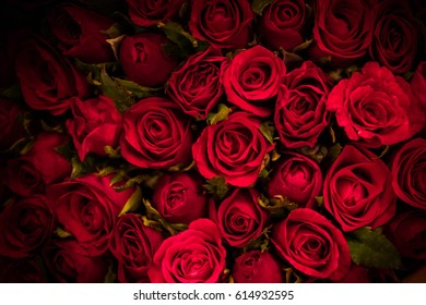 lot of red roses , selected focus ,soft focus
