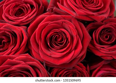 red roses, a sign of true love