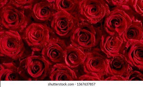 Red Roses Top View Bouquet Background