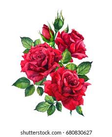 Red roses. Watercolor sketch