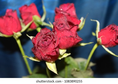 red roses  with waterdrops