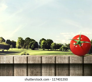 Red Round Tomato on a Wooden Fence