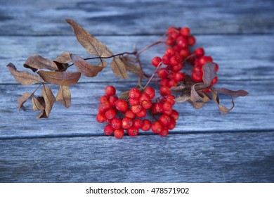 Red rowan berries on the old wooden table