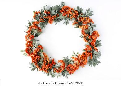red rowan wreath frame on white background. flat lay, frame wreath, autumn wallpaper
