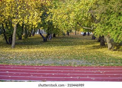 Red running tracks in sport stadium in autumn park