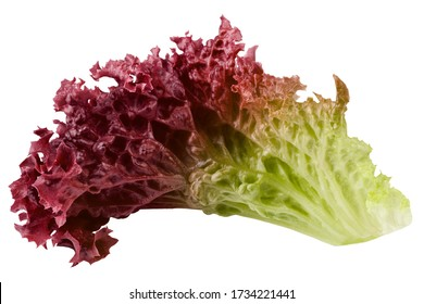 Red salad, lettuce leaf, lollo rosso, isolated on white background, clipping path, full depth of field