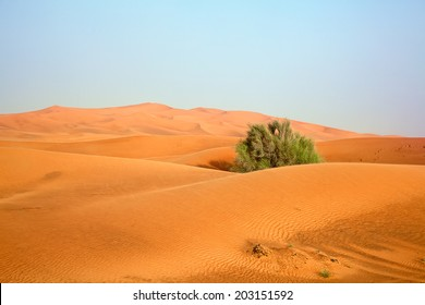 "Red sand ""Arabian desert"" near Dubai, United Arab Emirates"