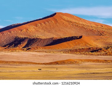 Red sand dune covered by grass in sunny morning. Sossusvlei dunes, Namib Naukluft national park, Namibia.