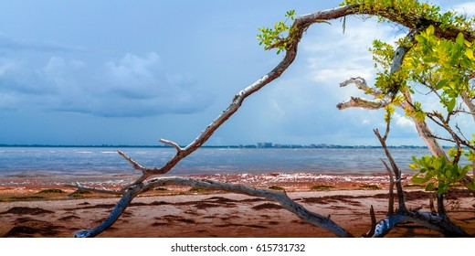 red sand on Sanibel beach with half dead tree