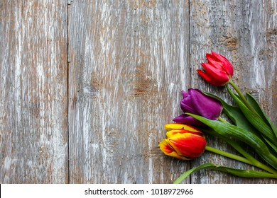 Red, scarlet and purple tulips on wooden background. Perfect invitation for mother's day or international women's day. Minimalist bright spring flower postcard. Summer flowers on real wooden texture.