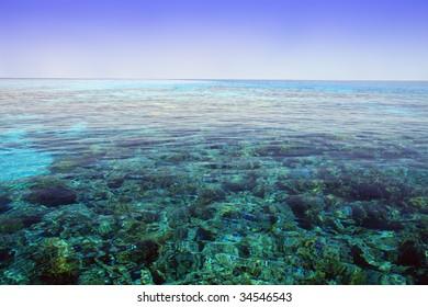 Red Sea, Aqaba gulf, Egypt. Coral reef.