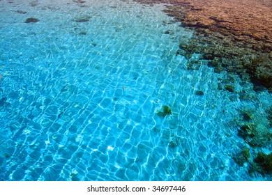 """Red Sea, Aqaba gulf, Egypt. Coral reef """"Napoleon""""."""