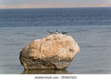 Red sea birds