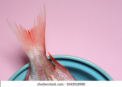 red Sea bream or Dorade rose tail and fin in a turquoise bowl on pastel pink background
