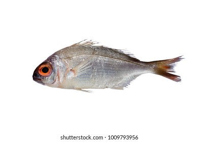 red sea bream fish isolated on white.