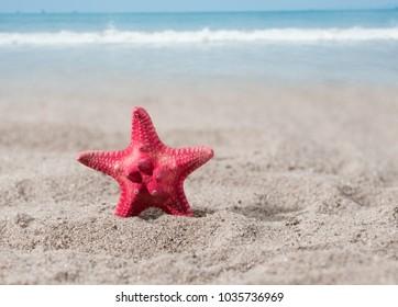 red sea star on sand of seashore