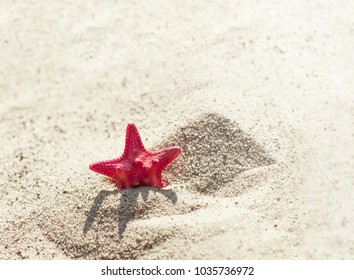 red sea star on sand