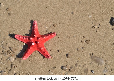 Red sea star on a wet beach sand