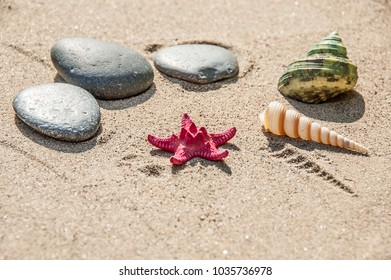 red sea star and shells on sand
