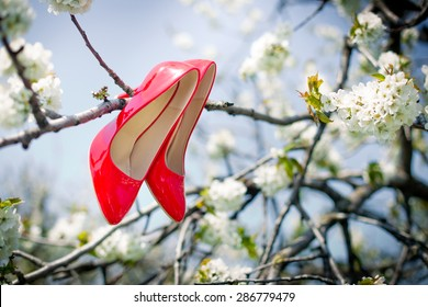 the red shoes on the blossoming sweet cherry tree