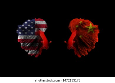 Red Siamese fighting fish in USA and China flag on fish body for trade war concept