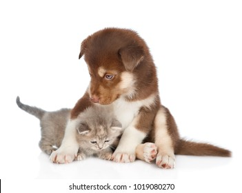 Red Siberian Husky puppy hugging cute kitten. isolated on white background
