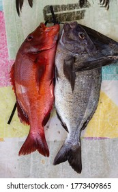 Red and silver snapper fish lie side by side, fresh from the sea at Kalk Bay Harbour, Cape Town, South Africa