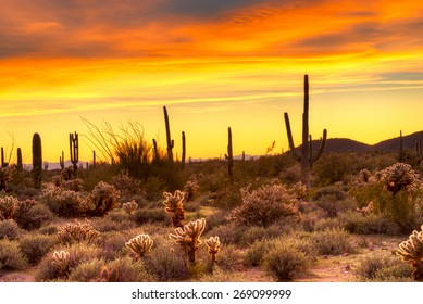 Red sky over Sonoran Desert, at sunset.