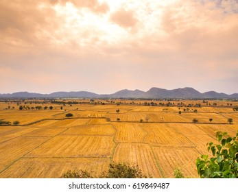 Red sky and wide grassland livestock