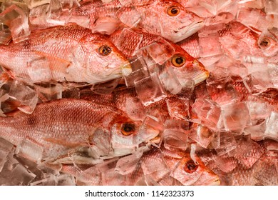 Red Snapper Images, Stock Photos & Vectors | Shutterstock