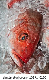 A Red Snapper freshly caught rest in ice at a seafood market.