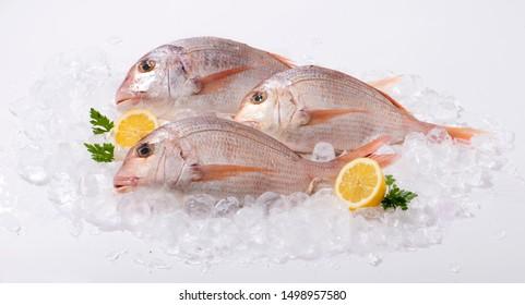 Red Snapper on ice whit lemon