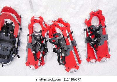 Red Snowshoeing on white snow