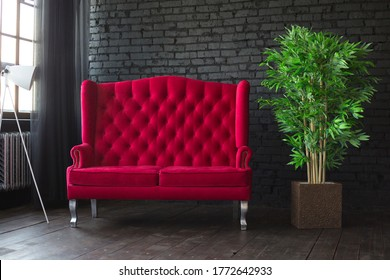 Red sofa stands near the window against a black wall next to green flower in pot. Stylish interior