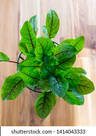 Red sorrel for fresh salad - Top view