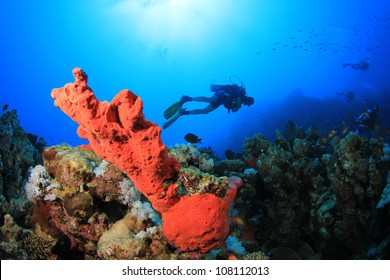 Red Sponge and Scuba Diver Underwater