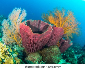 Red sponge with sea fans