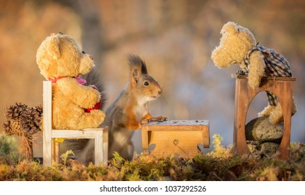 Red squirrel att an table with bears