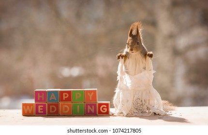 red squirrel with blocks in an wedding dress
