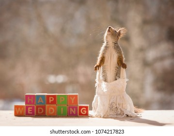 red squirrel with blocks and an wedding dress