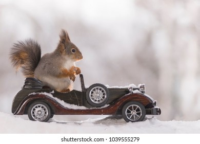 red squirrel in an car in the snow