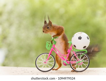 red squirrel with an cycle and an football